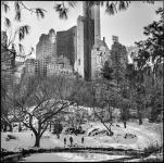 USA, N.Y. Central Park 2015